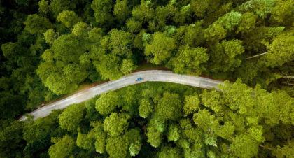 kontakt z naturą, kolarz w lesie